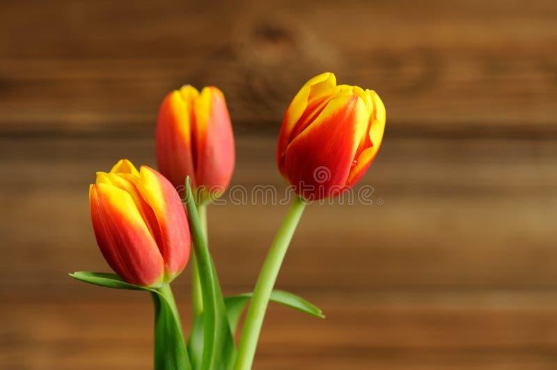 Tulipes rouges et jaunes sur le fond en bois photographie stock libre de droits