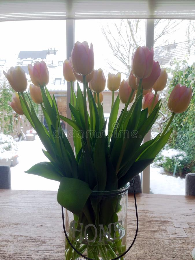 Tulipes sur la table photographie stock libre de droits
