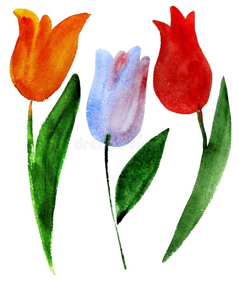 Tulipes sur le blanc illustration libre de droits