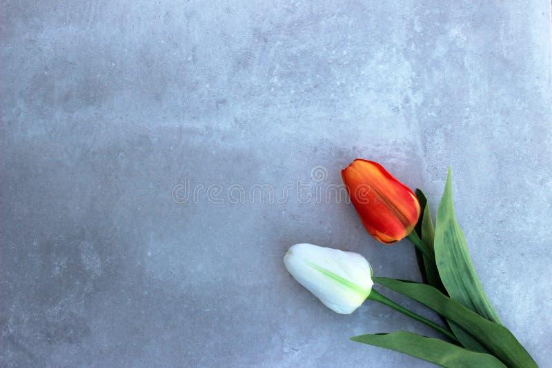 Tulipes sur le fond de concerte avec l'espace de copie pour le message Fond de jour du ` s de mère Vue supérieure photographie stock