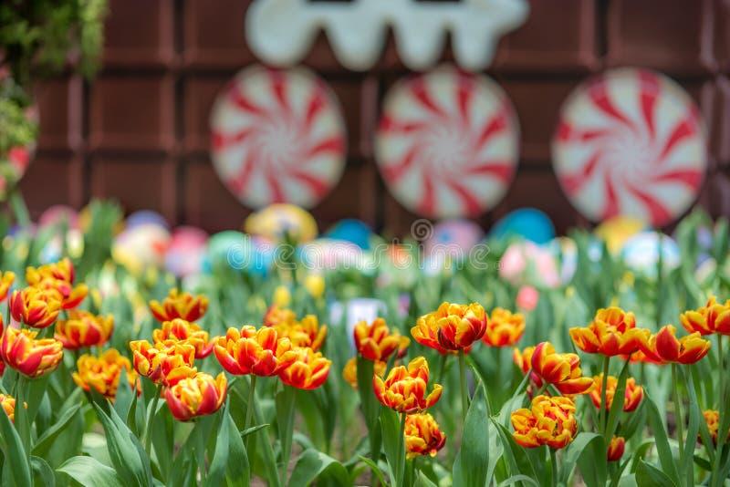 Tulipmania 2015 jardins pela baía Singapura foto de stock royalty free