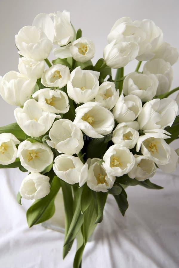 Tulips stock photography