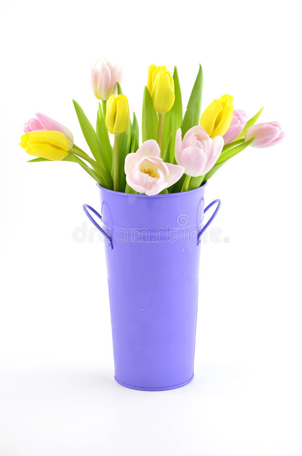 Download Tulips stock photo. Image of flowers, white, bucket, fresh - 23505428