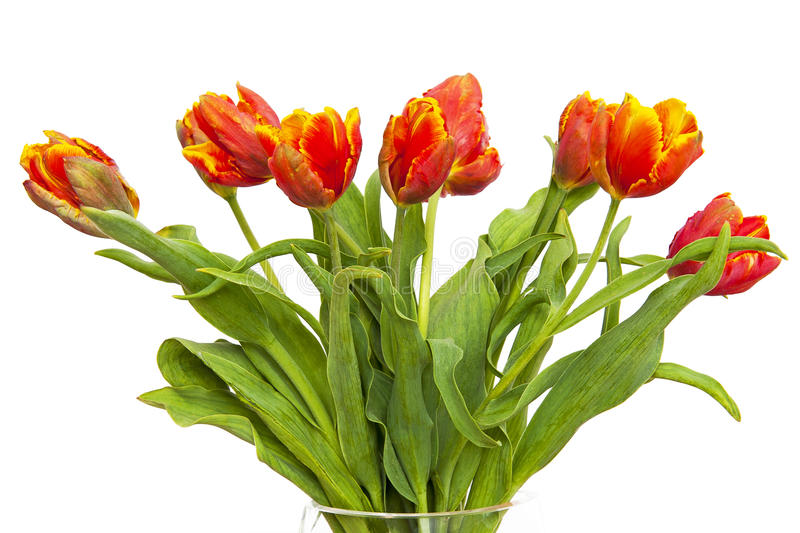 Download Tulips Royalty Free Stock Images - Image: 25409279