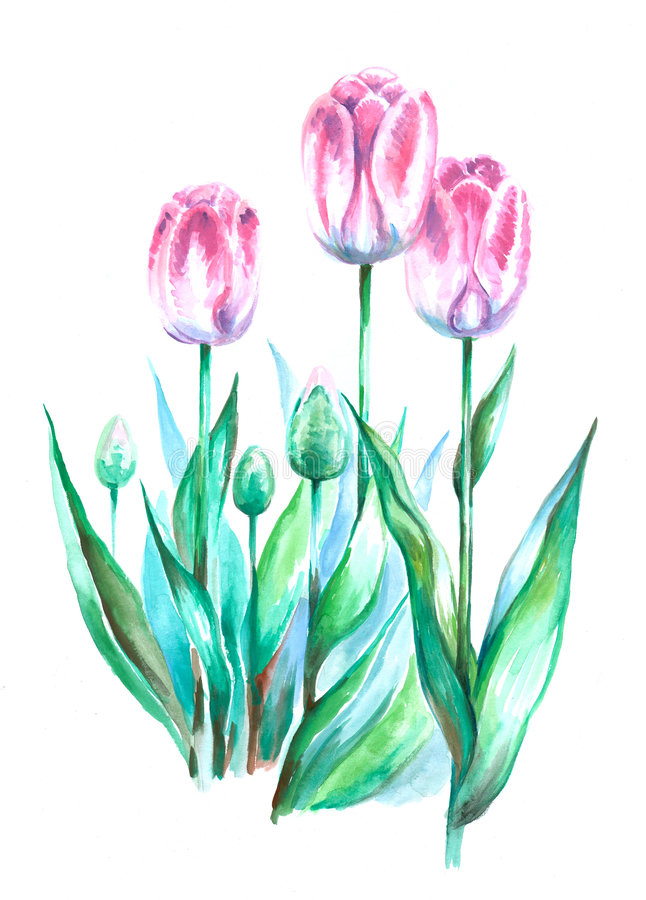 Download Tulips Royalty Free Stock Photo - Image: 5085145