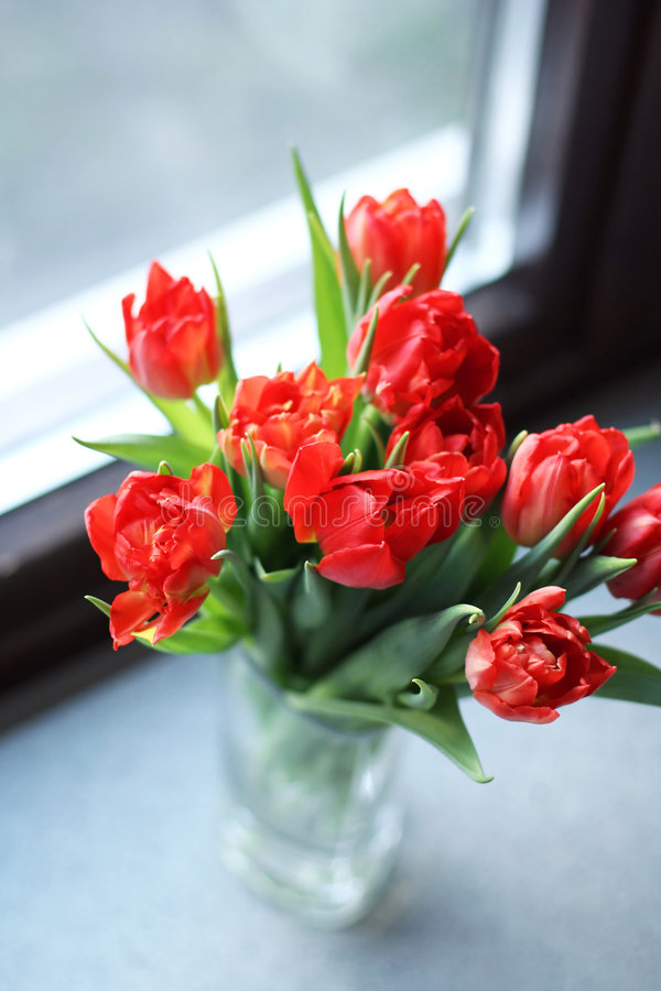 Download Tulips stock image. Image of fresh, color, bouquet, window - 7601563
