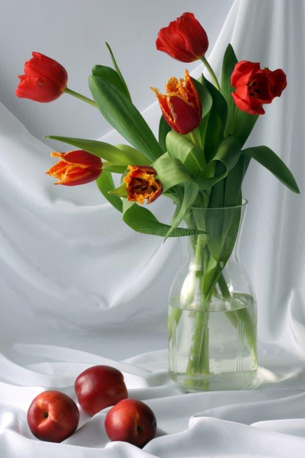 Free Tulips Royalty Free Stock Image - 8671496