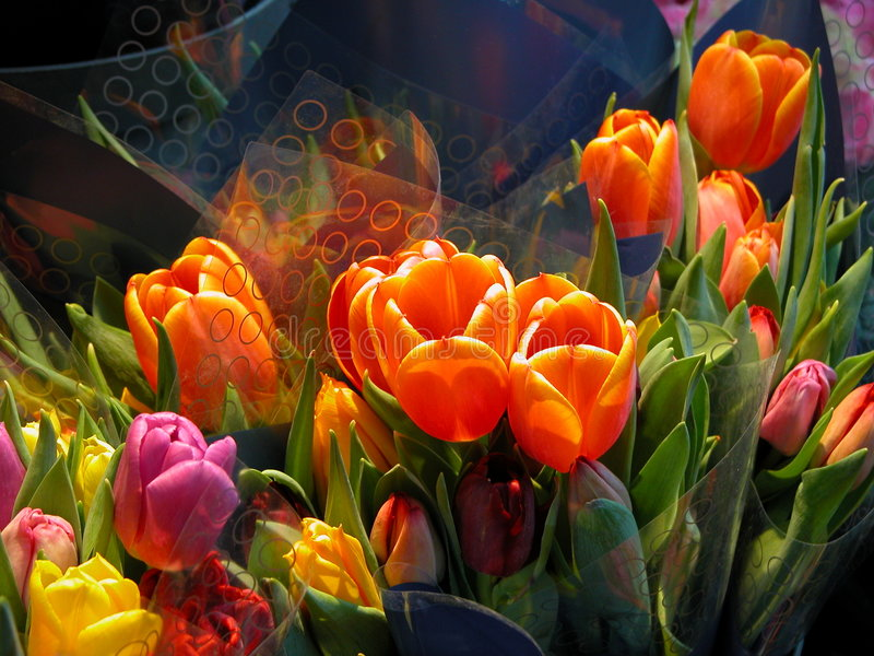 Tulips in all colors stock photo