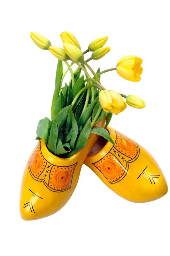 Tulips amarelos holandeses fotografia de stock royalty free