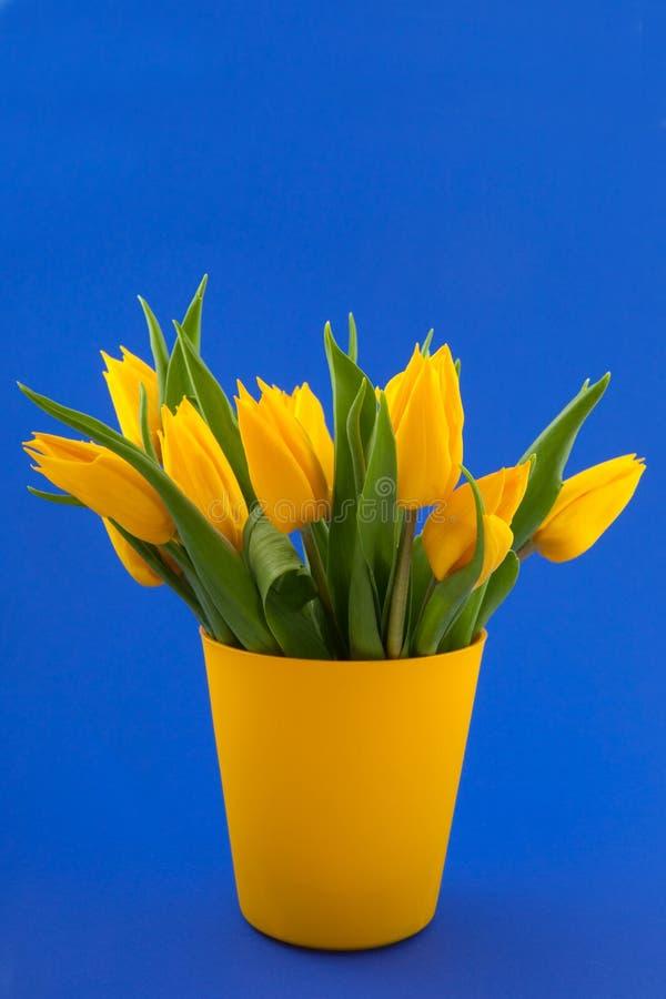 Tulips amarelos no azul imagem de stock royalty free