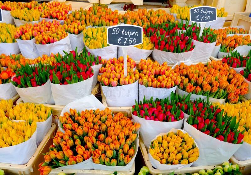 Tulips in Amsterdam stock photo