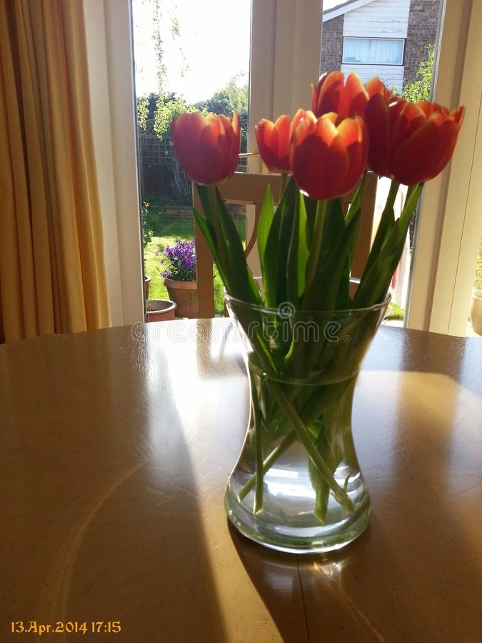 Tulips from Amsterdam stock image