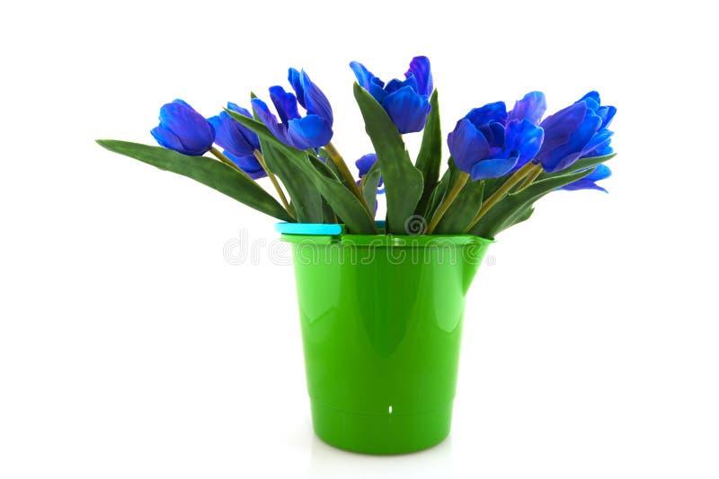 Tulips azuis fotografia de stock