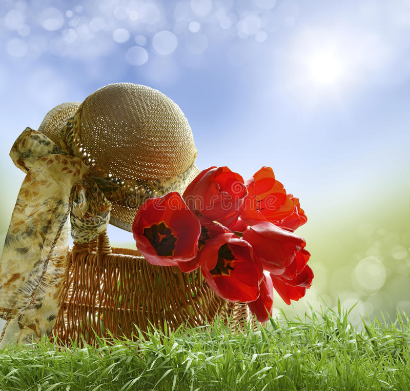 Download Tulips in the basket stock photo. Image of grow, alive - 30619784