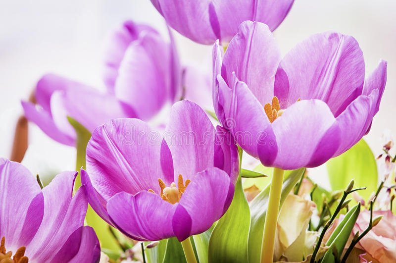 Download Tulips stock image. Image of up, close, botany, formal - 34902227
