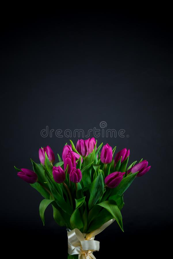 Tulips on black royalty free stock photography