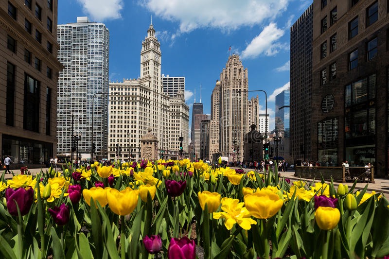 Tulips in bloom on Michigan Avenue in Chicago royalty free stock photography