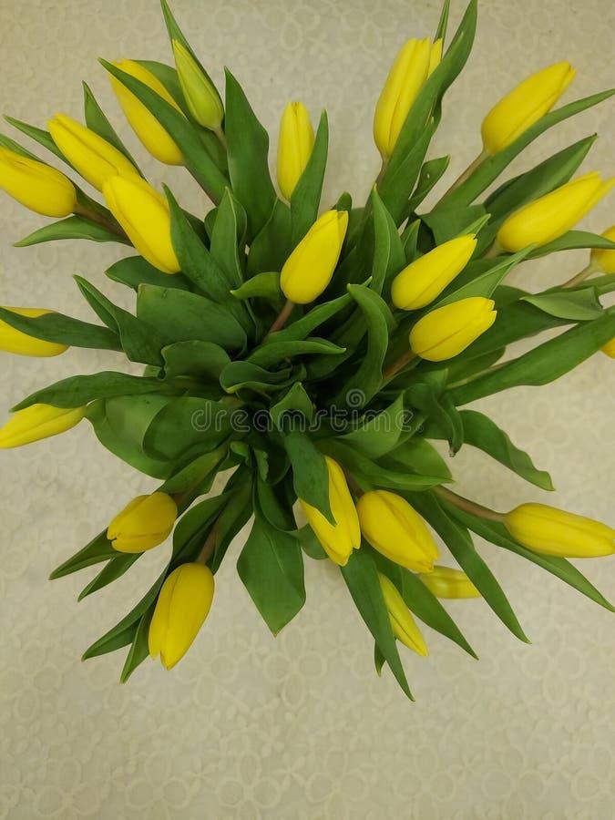 TULIPS Blumen Hintergrund HD lizenzfreies stockbild