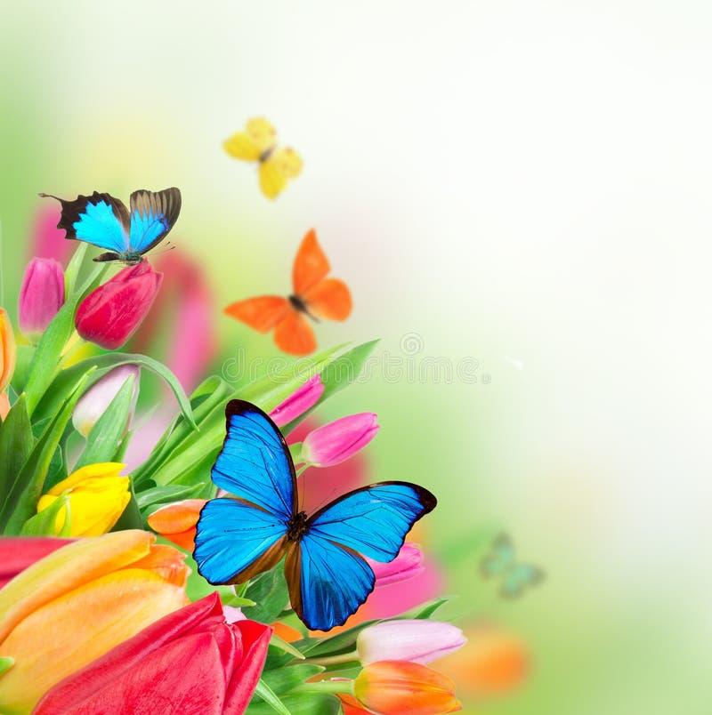 Tulips bonitos com borboletas exóticas imagens de stock royalty free