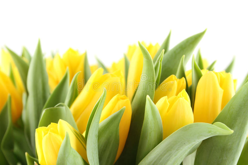 Tulips Bouquet stock images
