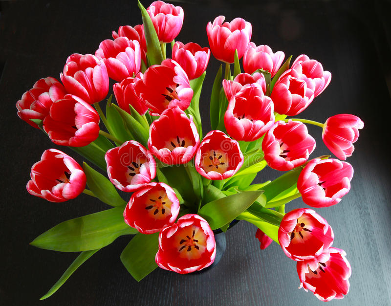 Tulips bouquet stock photography