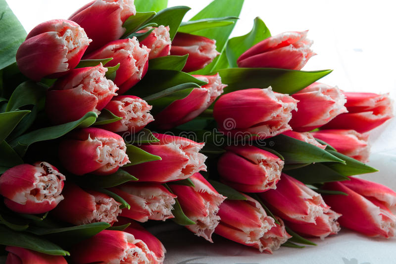 Tulips bouquet royalty free stock photography