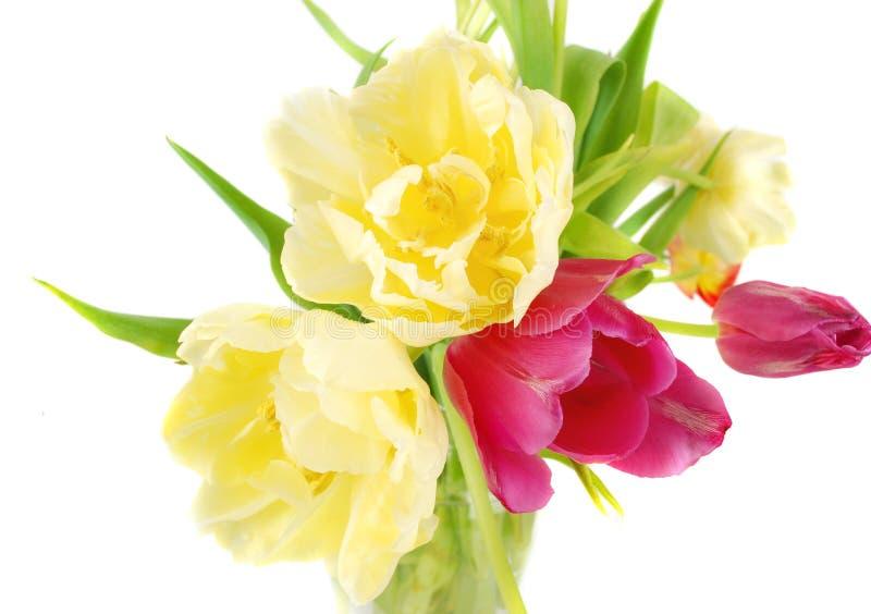 Tulips bouquet in glass vase stock photos
