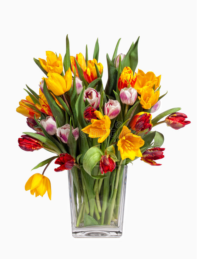 Download Tulips Bouquet Isolated On White Stock Photography - Image: 23790882