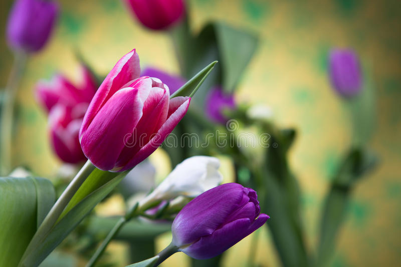 Download Tulips stock photo. Image of bunch, bouquet, celebration - 83711866