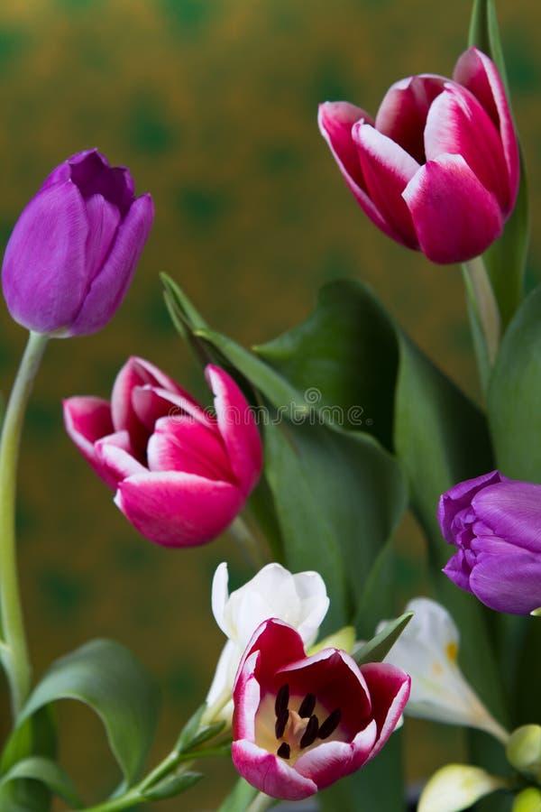 Download Tulips Stock Photo - Image: 83712083