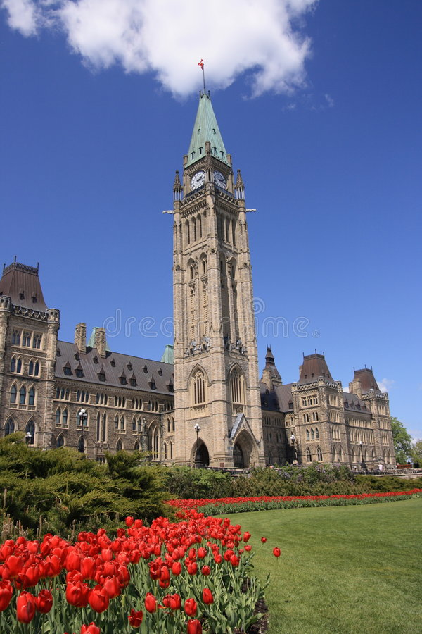 Download Tulips at Centre Block stock image. Image of architecture - 2485859