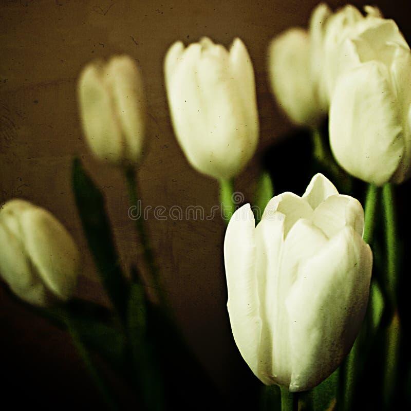 Tulips com textura imagens de stock royalty free