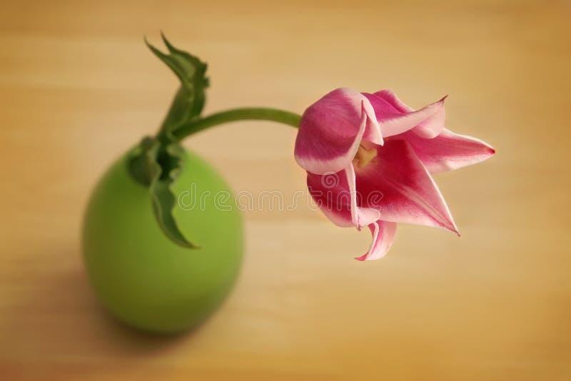 Tulips cor-de-rosa no vaso verde foto de stock royalty free