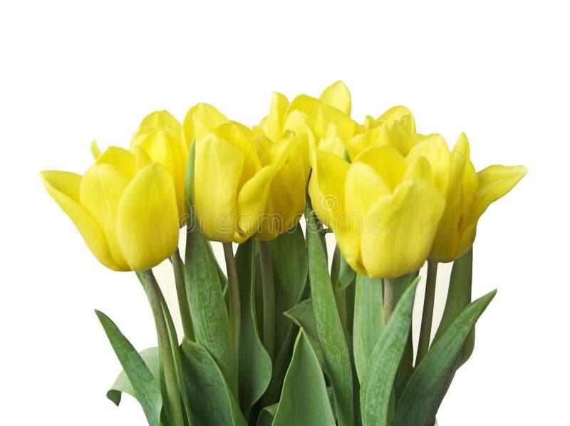 Download Tulips da mola imagem de stock. Imagem de branco, arranjo - 102939