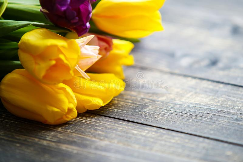 Tulips on dark wooden background. Easter card with space for your greetings royalty free stock photography