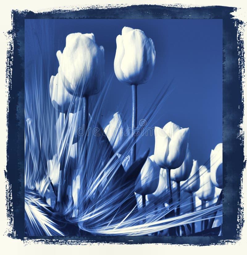 Tulips in delft's Blue stock illustration