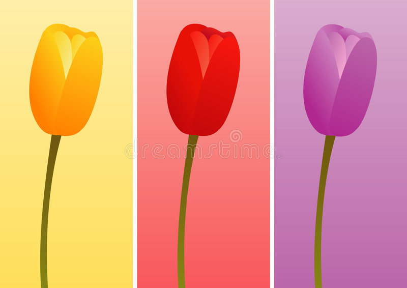 Tulips of Different Colors royalty free stock image
