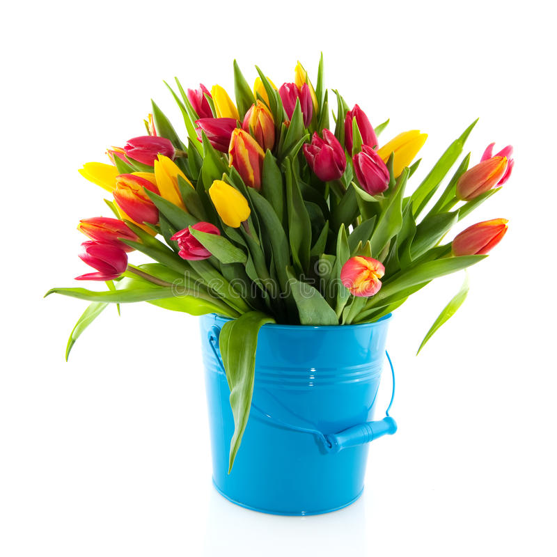 Tulips do ramalhete imagens de stock royalty free