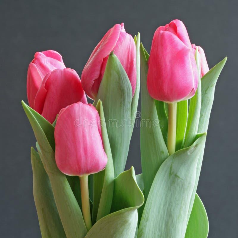 Download Tulips do Valentim imagem de stock. Imagem de romance - 12802965
