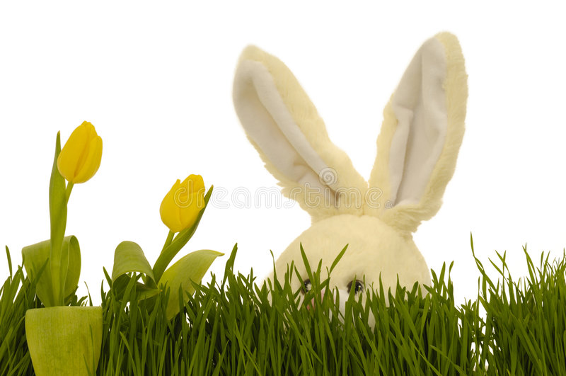Download Tulips and easter bunny stock image. Image of color, hide - 4400569