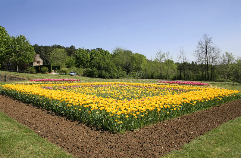 Download Tulips Flower Bed In Garden Stock Photo - Image: 2587034