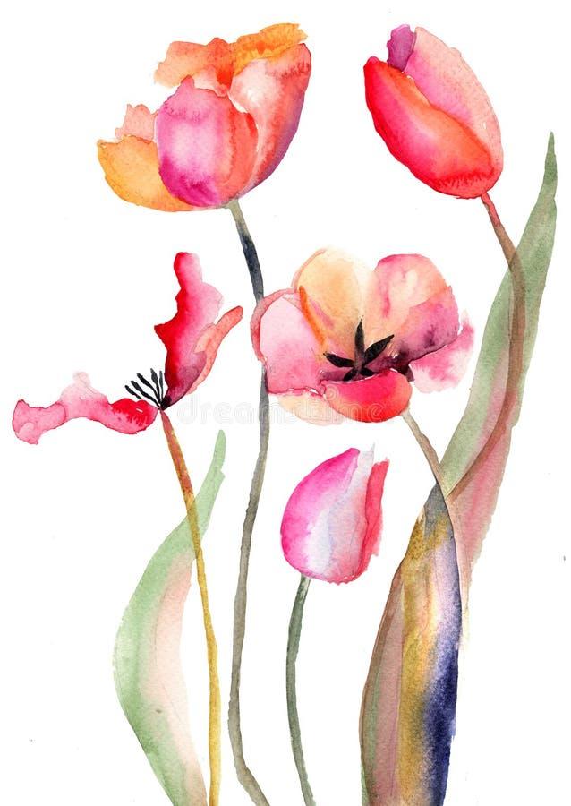 Tulips flowers vector illustration