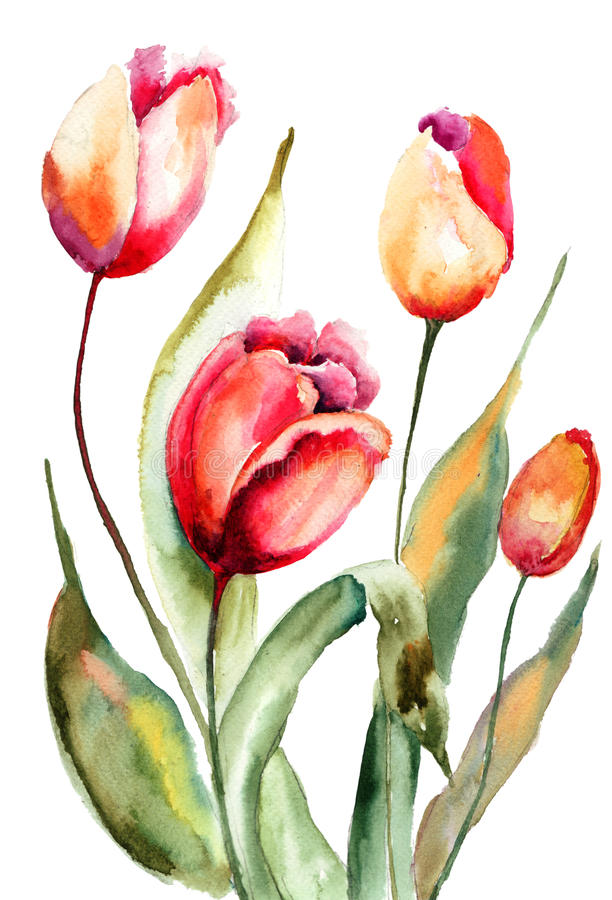 Download Tulips flowers stock illustration. Illustration of tulips - 32642219