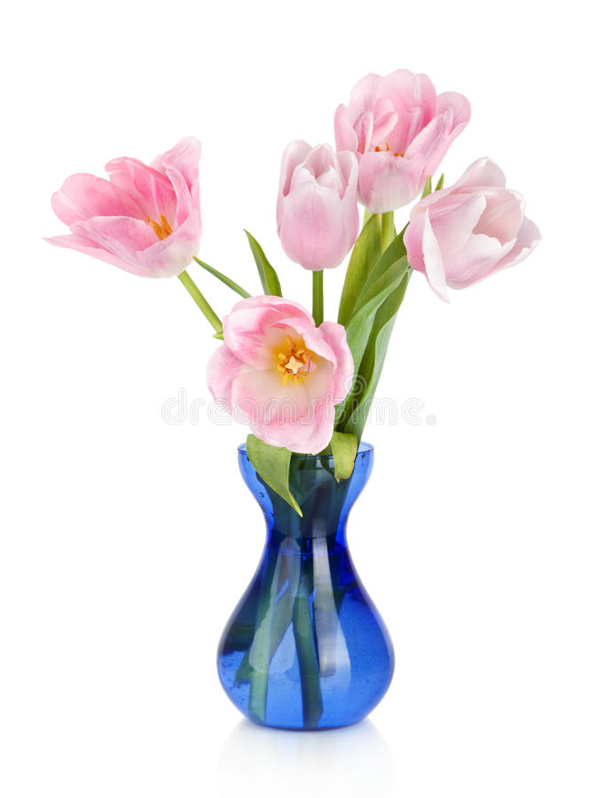 Tulips Flowers in blue vase isolated on white royalty free stock images