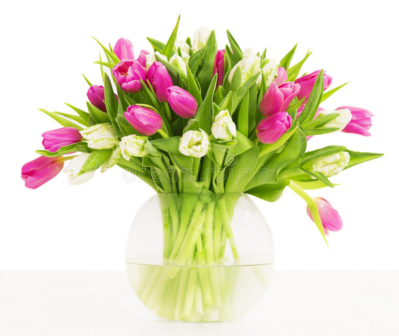 Tulips flowers bouquet in vase, white background stock photography