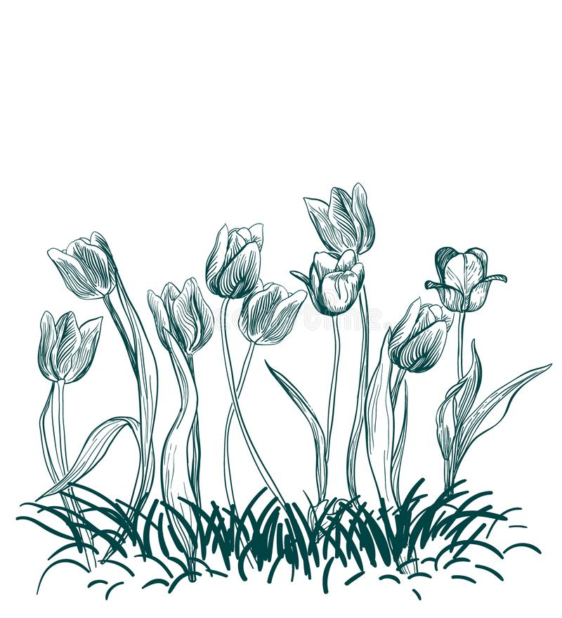 Tulips flowers engraved grass vector illustration sketch royalty free illustration