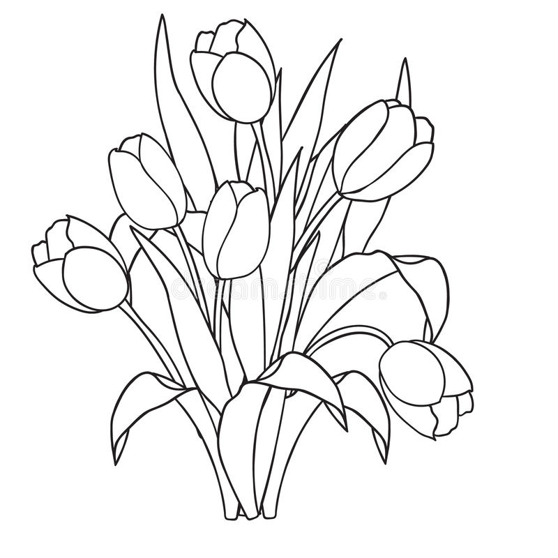 Tulips Flowers Ornamental Black And White Coloring Pages Stock Vector Illustration Of Line Plant 71366884