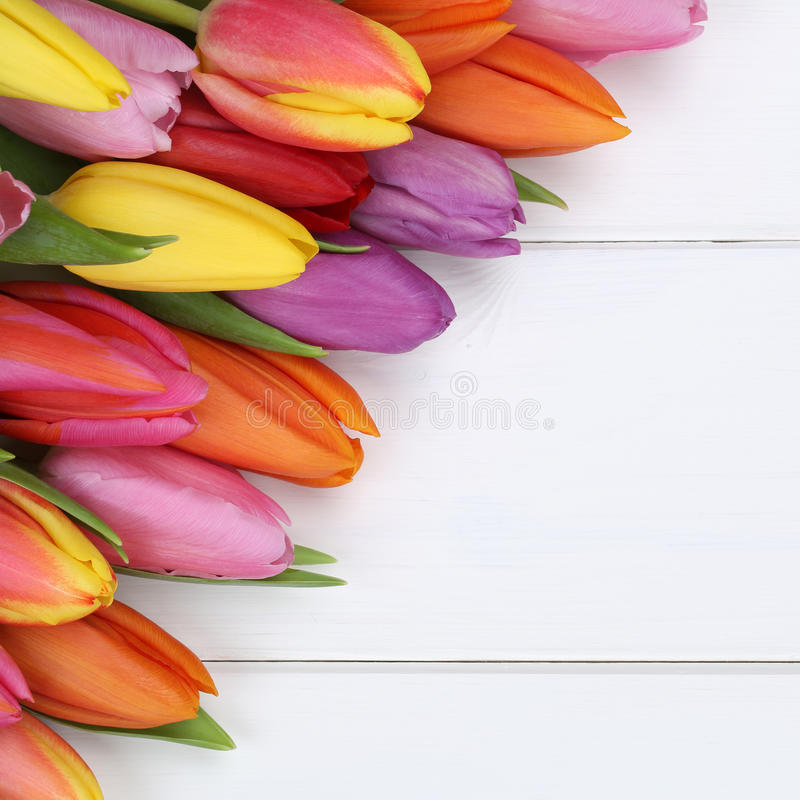 Tulips flowers in spring, Easter or mother's day on wooden board. Tulips flowers in spring, Easter, birthday or mother's day on wooden board royalty free stock photos