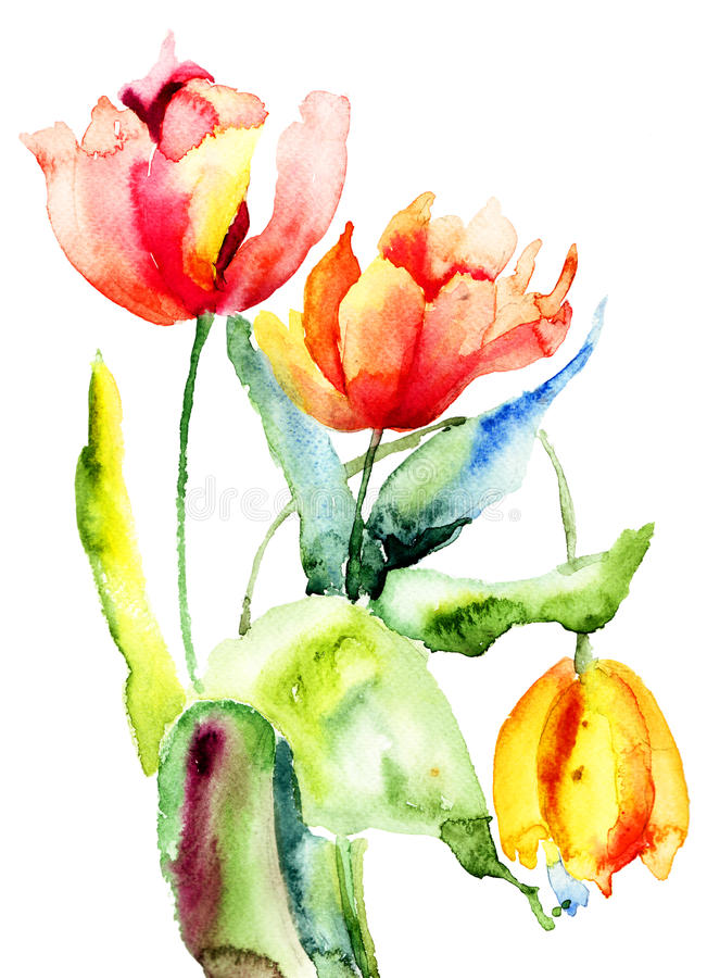 Tulips flowers. Three Tulips flowers, Watercolor painting royalty free illustration