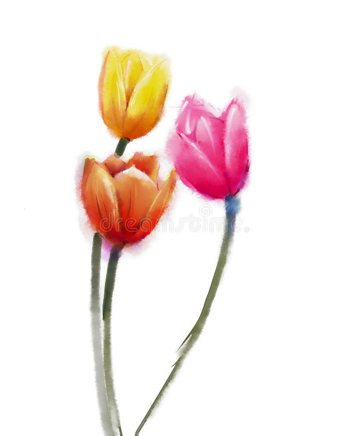 Tulips flowers, Watercolor painting vector illustration